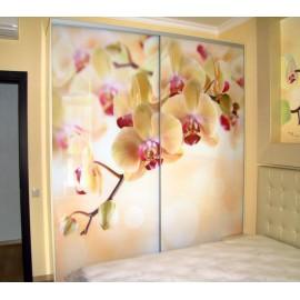 Шкафы купе стеклянные с рисунком